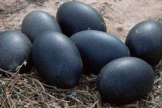 تخم مرغ 1000تومانی روزگار بازار را سیاه می کند