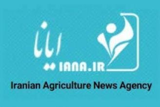 380 هزار تن بذر گواهیشده گندم بین کشاورزان توزیع شد