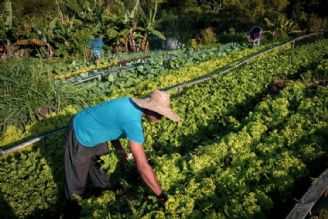 موانع پیش روی کشاورزی زیستی در کشور