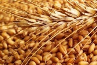 پیشبینی دولت قبل غلط از آب درآمد/ دولت جدید باید 6 میلیون تن گندم وارد کند